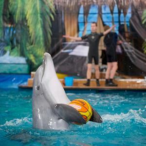 Дельфинарии, океанариумы Геленджика