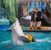 Дельфинарии, океанариумы в Геленджике