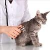 Ветеринарные клиники в Геленджике